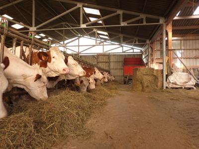 Agriculture, Avressieux, lait, fromage, culture, champs, pain, céréales, tabac, viande