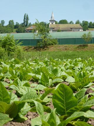 tabac, Avressieux, 73240
