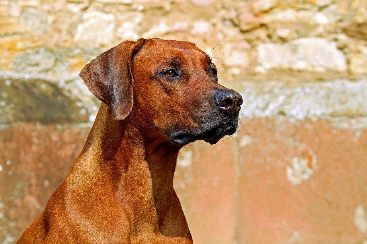 Nuisances : divagation des chiens